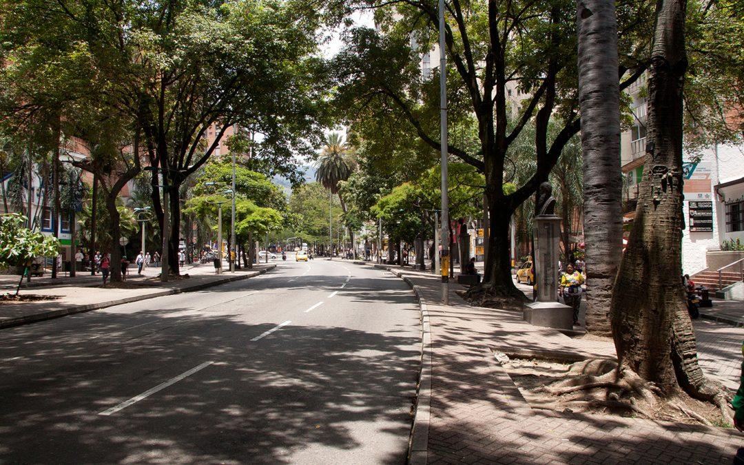 Árboles centenarios y singulares del centro de Medellín